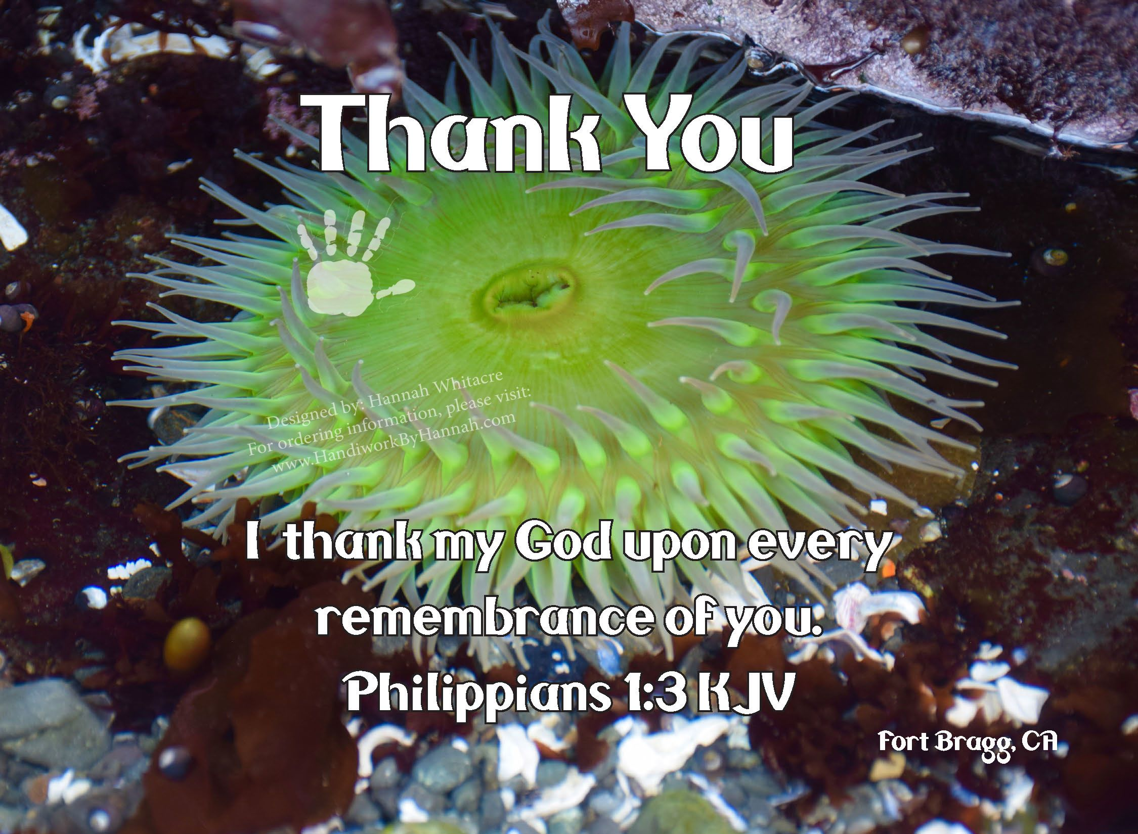 """Featured image for """"Sea Urchin (CARD-0039) – 10 Cards"""""""