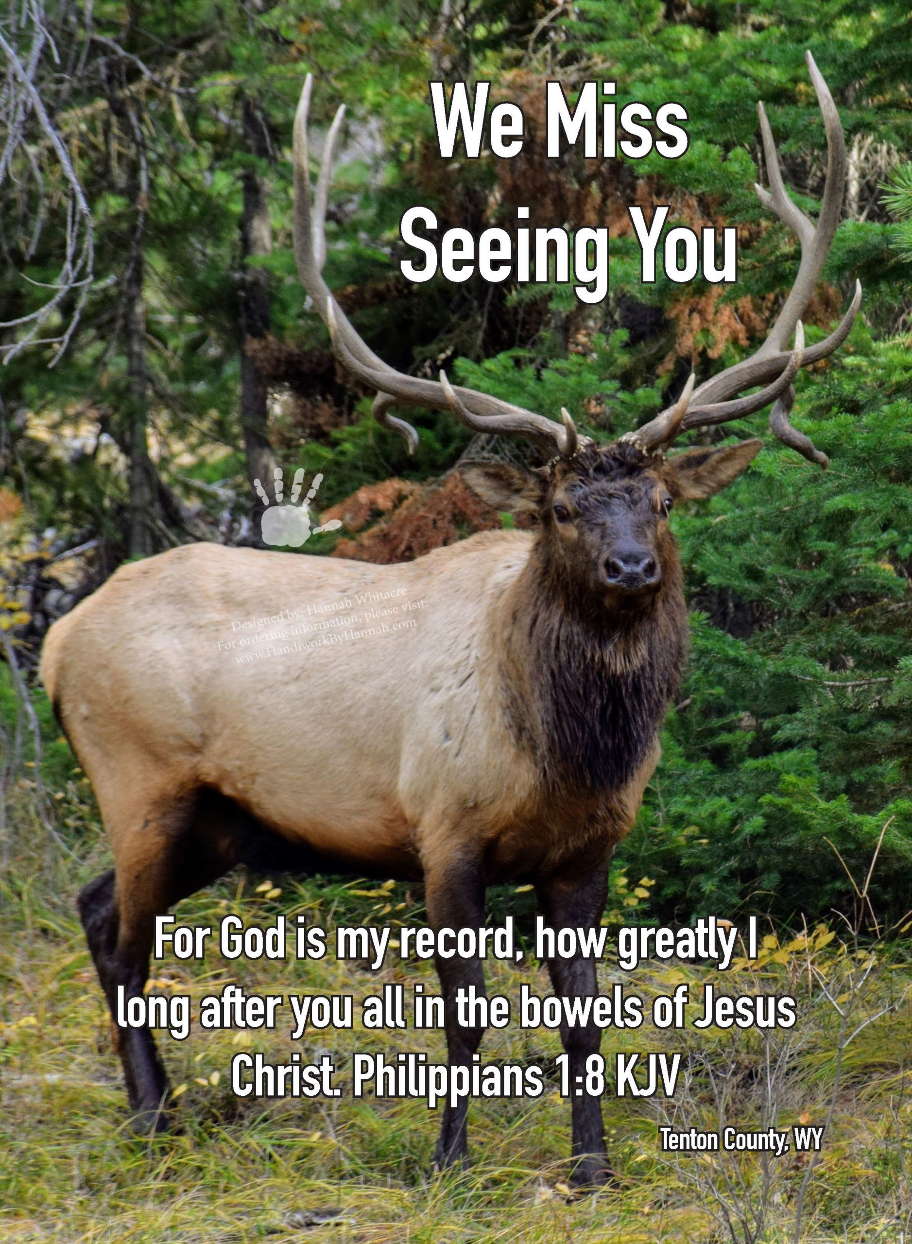 """Featured image for """"Elk (CARD-0024) – 10 Cards"""""""