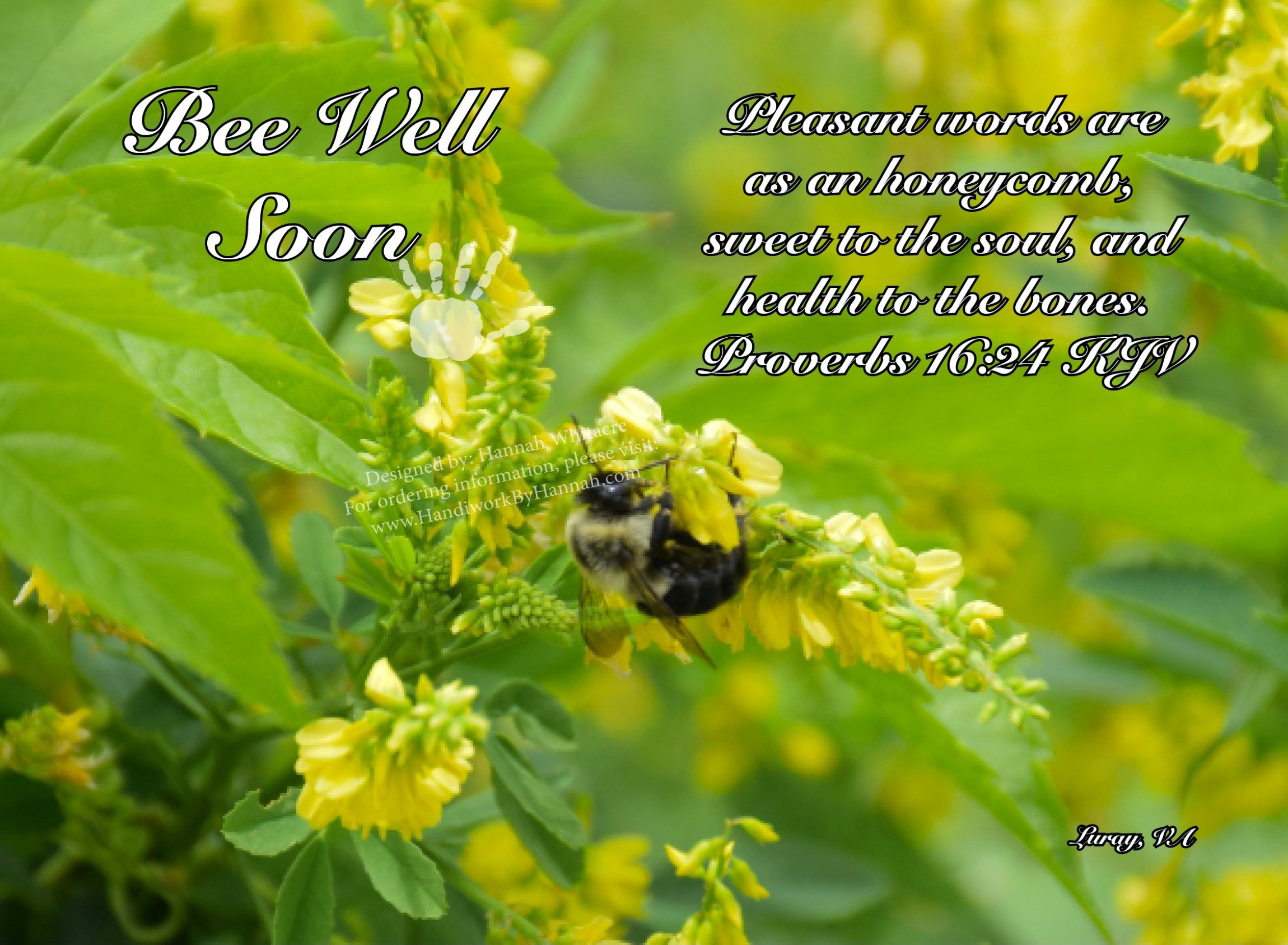 """Featured image for """"Bee (CARD-0048) – 10 Cards"""""""